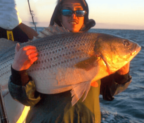 Wild Card Charters Stripers Photo Gallery