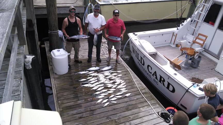 This half day summer charter ended up producing another fine catch with plenty of fillets for the table for this group staying in Kitty Hawk NC.